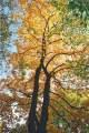 kolory nadchodzącej jesieni