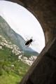 Pszczoła w oknie