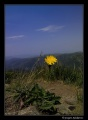kwiatuszek na szlaku