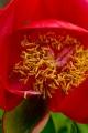 Kwiatek 7