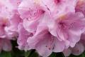 Kwiatek 4
