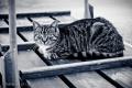 Kot portowy