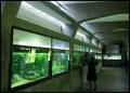 akwarium - wnętrze budynku