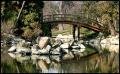 Ogród Japoński - mostek