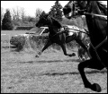 konie vs konie mechaniczne