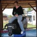 ujeżdżanie byka