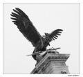 Turul - mityczny ptak węgierski