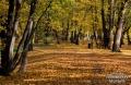 Park Szczytnicki 2