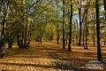 Park Szczytnicki 1